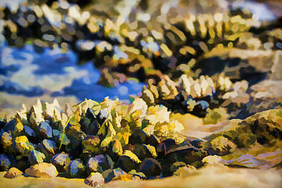 Laguna Beach Tide Pool Pattern 4 Print by Scott Campbell