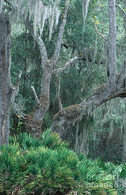 Lake Kissimmee State Park Print by Mark Newman