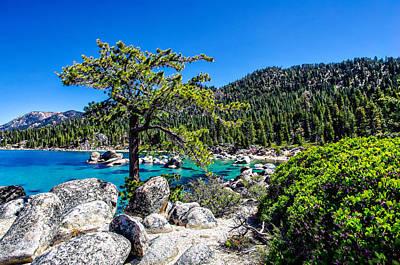Sand Harbor Photograph - Lake Tahoe Bonsai Tree by Scott McGuire
