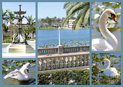 Florida Photograph - Lakeland Swans Collage by Carol Groenen