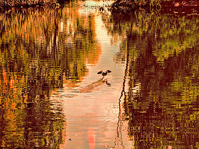 Landing Duck Absrtact Print by Leif Sohlman
