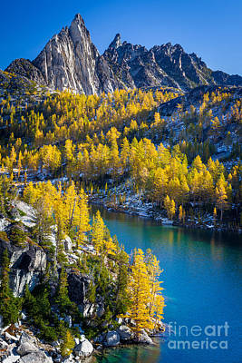 Larches At Perfection Lake Print by Inge Johnsson