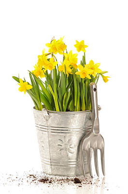 Large Bucket Of Daffodils Print by Amanda And Christopher Elwell