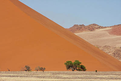 Large Mammals Photograph - Large Dune With Trees In Front by Jaynes Gallery