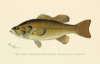 Vintage Painting - Large Mouthed Black Bass by Gary Grayson
