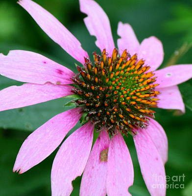 Wildflower Photograph - Larger Than Life  by Neal  Eslinger