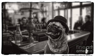 Pug Photograph - Last Call by Edward Fielding