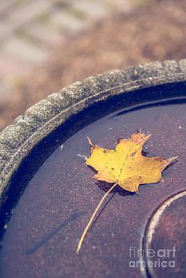 Last Leaf Of Autumn Print by Diane Diederich