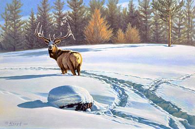 Last Look  -elk Print by Paul Krapf