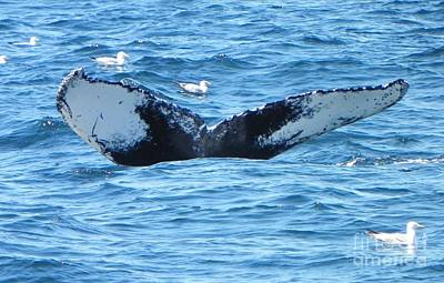 Whale Photograph - Last Looks by Paul Smith