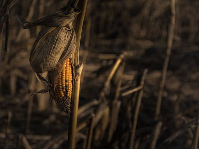 Harvest Photograph - Last Year's Crop by Chris Fletcher