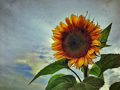 Muscatine Photograph - Late August Sun by Jame Hayes