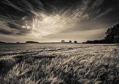 Black And White Rural Photograph - Late Evening by Chris Fletcher
