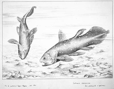 Latimeria Chalumnae Smith Print by Natural History Museum, London