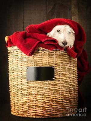 Westie Terrier Photograph - Laundry Day by Edward Fielding