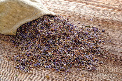 Dried Photograph - Lavender And Burlap by Olivier Le Queinec