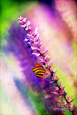 Lavender And Butterlies Print by Darren Fisher