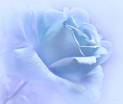 Rose Portrait Photograph - Lavender Blue Rose Flower by Jennie Marie Schell