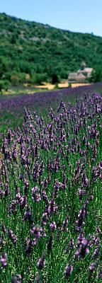 Lavender Crop With A Monastery Print by Panoramic Images
