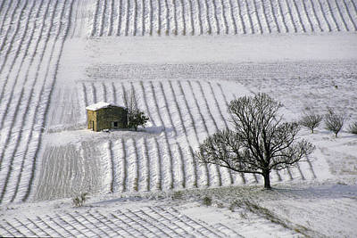 Europe Provence Aix-en-provence Photograph - Lavender Field In Winter by Gilles Martin-Raget
