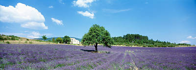 Provence Photograph - Lavender Field Provence France by Panoramic Images