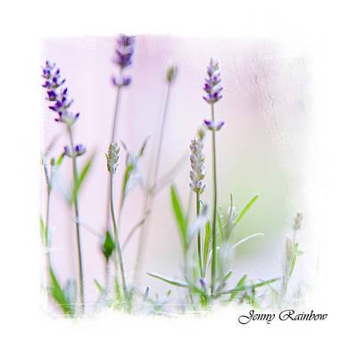 Lavender Fragrance Of France. Elegant Knickknacks Print by Jenny Rainbow