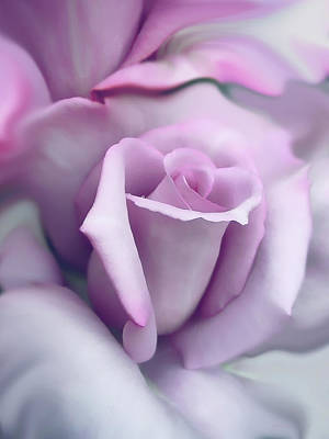 Lavender Rose Flower Portrait Print by Jennie Marie Schell