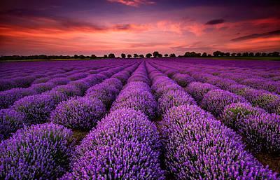 Lavender Sunset Original by Evgeni Ivanov