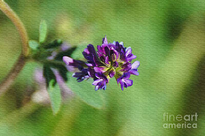 Day Photograph - Lavender Textured by Gloria Pasko