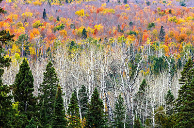 Of Autumn Photograph - Layers Of Autumn by Mary Amerman