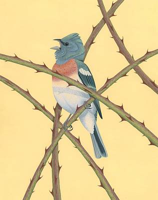 Bunting Painting - Lazuli Bunting by Nathan Marcy