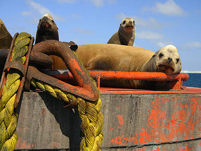 Guerrero Negro Photograph - Lazy Sealions by Doug Gould