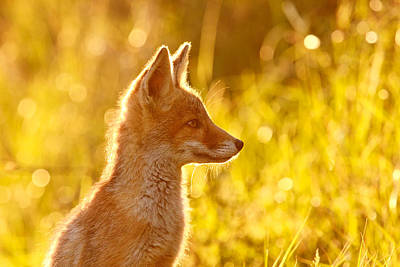 Red Photograph - Le P'tit Renard by Roeselien Raimond