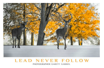 Deer Photograph - Lead Never Follow by Garett Gabriel