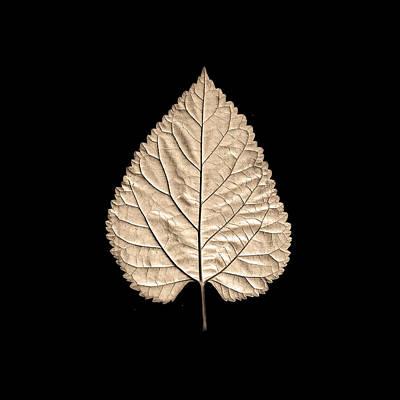 Plants Photograph - Leaf 5 by Sumit Mehndiratta