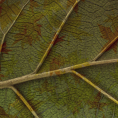 Earthtone Colored Art Photograph - Leaf Design II by Ben and Raisa Gertsberg