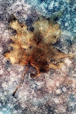 Leaf In Ice Print by Jack Daulton