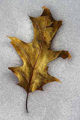 Fall Photograph - Leaf by Ivan Slosar