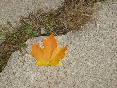 Leaf On Sidewalk Print by David Fiske