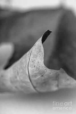 Bob Ross Photograph - Leaf Study 2 by Edward Fielding