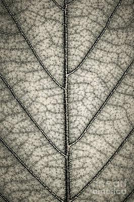 Leaf Texture In Sepia Print by Elena Elisseeva