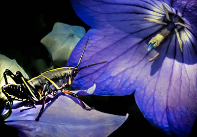 Grasshopper Photograph - Contemplation Of A Pistil by Karen Wiles