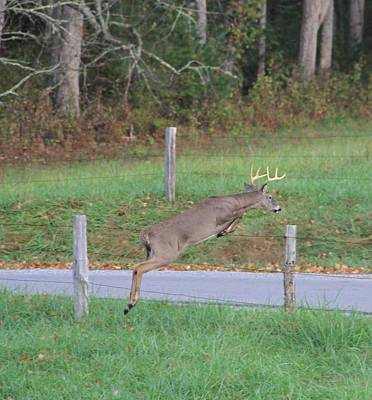 Bucks In Velvet Photograph - Leaping Buck In Smoky Mountains by Dan Sproul