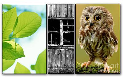 Owl Mixed Media - Leaves Barn Owl by Marvin Blaine