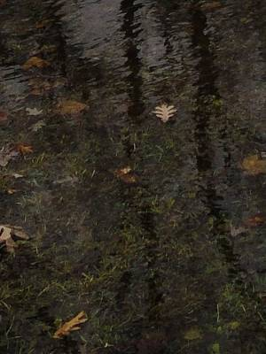 Leaves In The Waves Print by Guy Ricketts