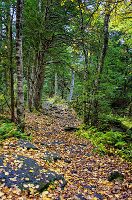 Mountain Photograph - Leaves On Trail by Donna Doherty