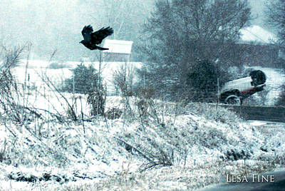 Crow Photograph - Leaving The Scene Of The Accident by Lesa Fine