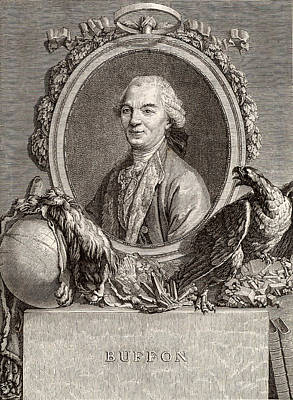 Leclerc De Buffon Print by Universal History Archive/uig