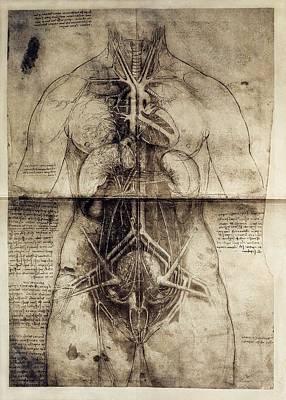 Anatomic Photograph - Leonardo Da Vinci 1452-1519. Anatomic by Everett