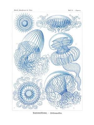 Jellyfish Drawing - Leptomedusae by Ernst Haeckel